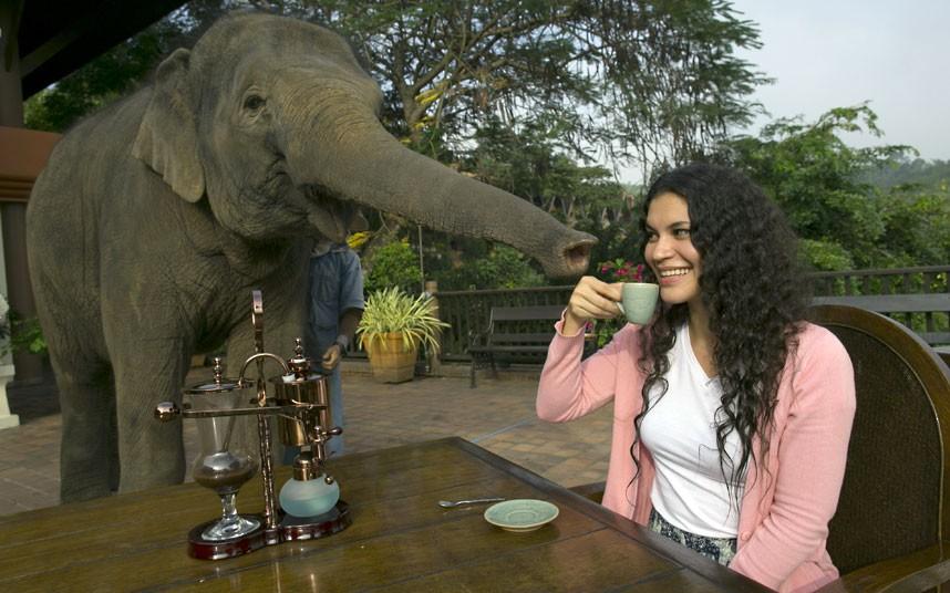 elephant-coffee_2424296k